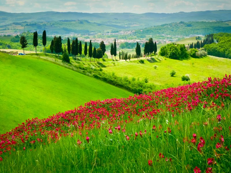Toscane landschap heuvels bomen