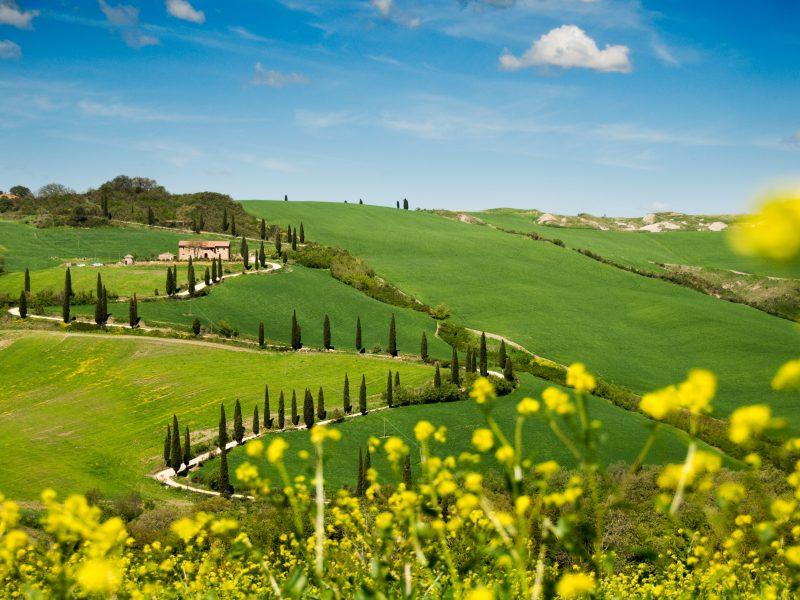 Toscane landschap bomen kronkelweg