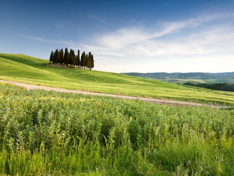 Toscane landschap bomen