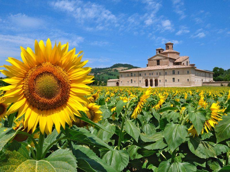 Marche kasteel zonnebloem