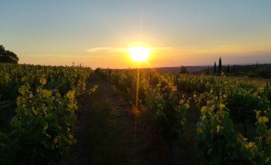 3x overnachten tussen de druiven in Toscane